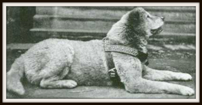 In 1920s, a dog(Hachiko) waited for 9 years after the death of his master outside the train station every morning until he himself passed away.