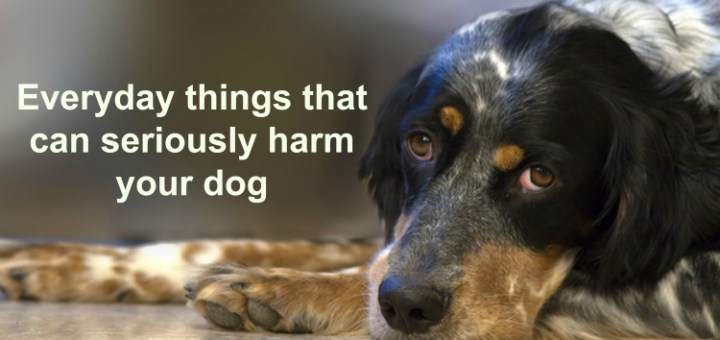 Everyday things that can seriously harm your dog