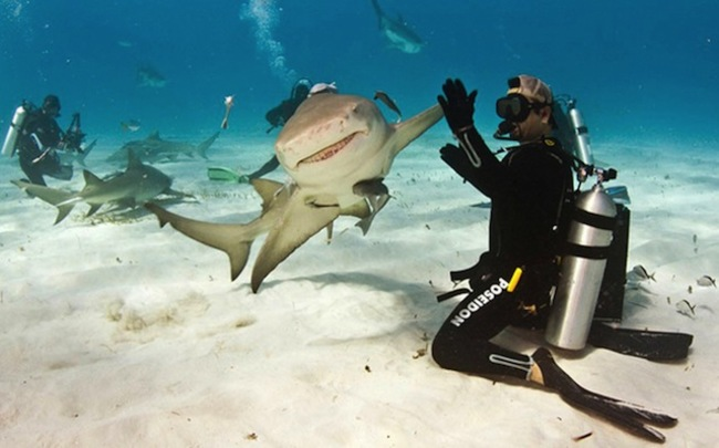 Shark handshaking with diver