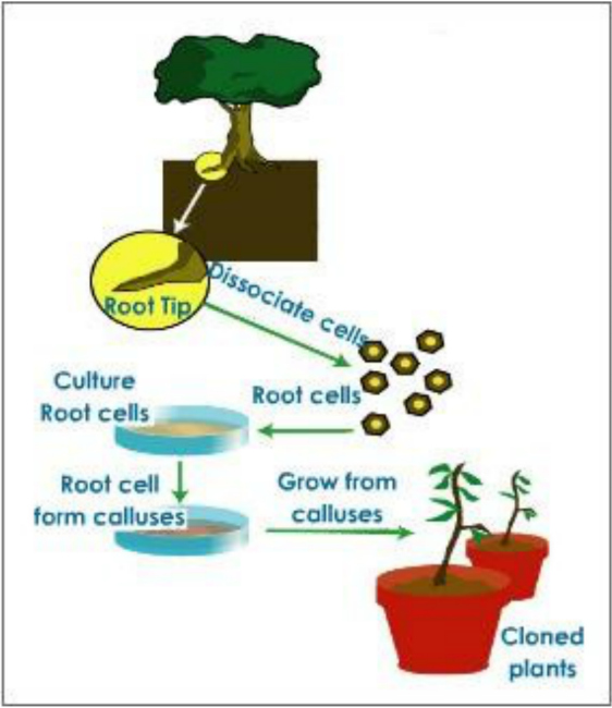 How the plants are inclined towards Restoration