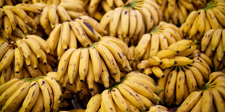 Bananas are the richest sources of energy providing nutrients