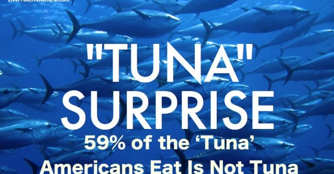 You think you are eating tuna, but it may not be tuna!