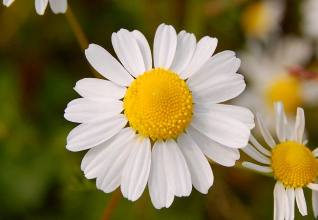 Check out the Chamomile treatment option!