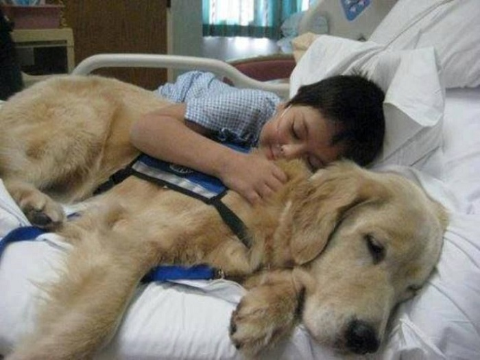 So who are these guys, these therapy dogs?