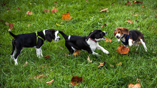 What's in store for these adorable pups?