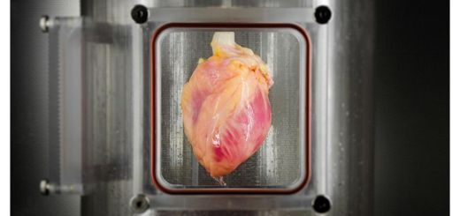 Amazing!! Scientists can now grow a human heart outside of a human body from stem cells
