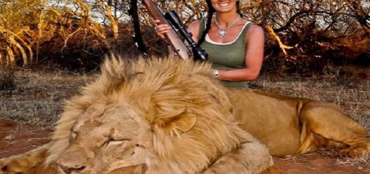 """Canned"" Lion hunting might become a thing of the past soon!"