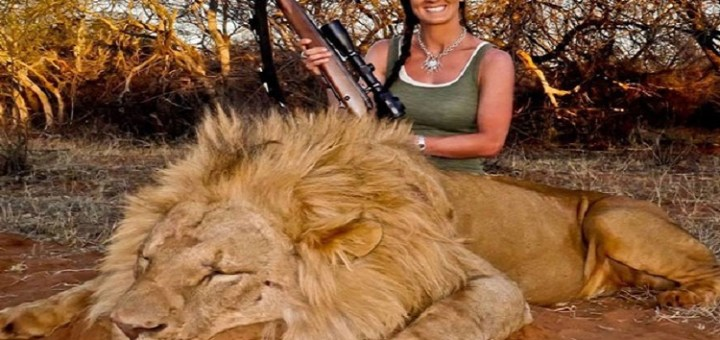 """""""Canned"""" Lion hunting might become a thing of the past soon!"""