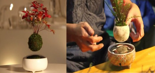 Japanese company has come up with an Incredible Invention - The Floating Bonsai trees!