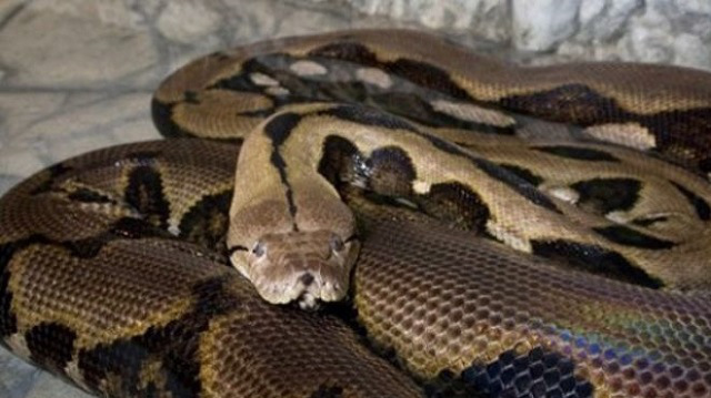Will she still sleep with her pet python? That's doubtful!!