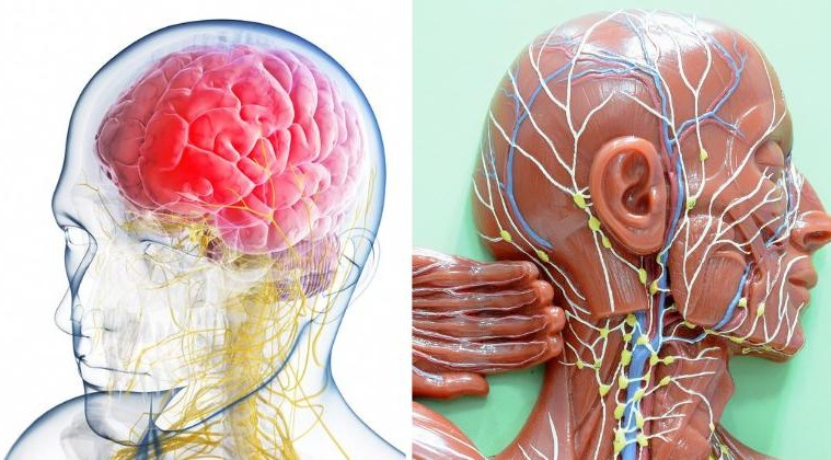 Connection between sleep and Lymphatic system