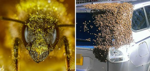 In a shocking incident, thousands of bees were seen attacking a car. Find out why?