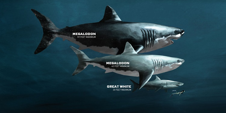 Megalodon Was Bigger Than The Great White Shark
