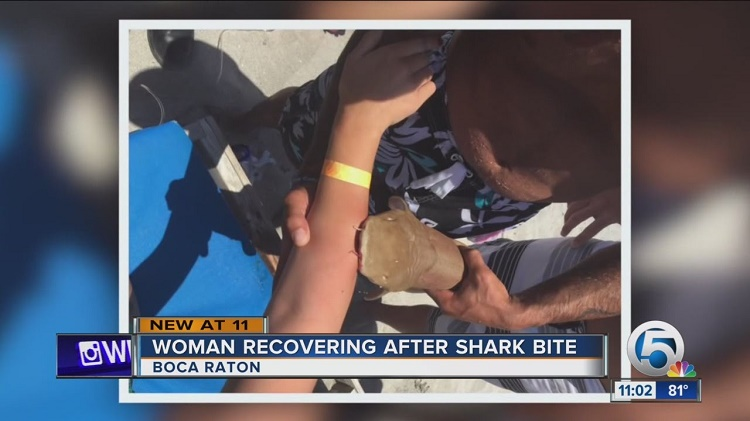 Weirdest Shark Attack As Reported By Witnesses