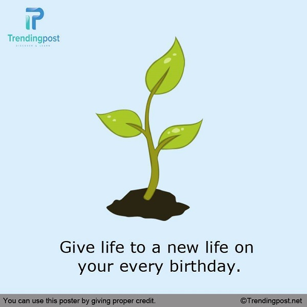 Plant a Tree on Your Birthday