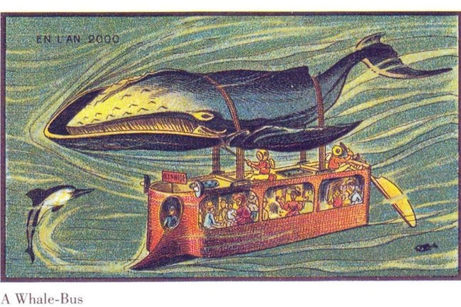 The whale bus
