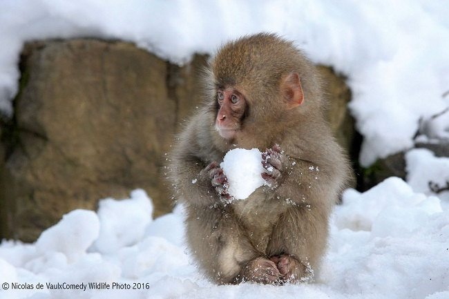playing with snowball