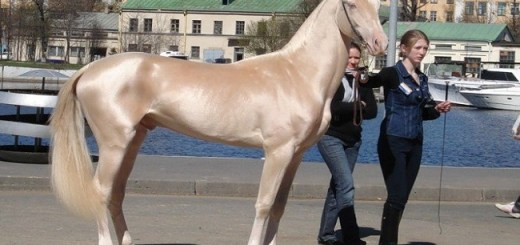 9 Famous race Horse Breeds that are simply stunning
