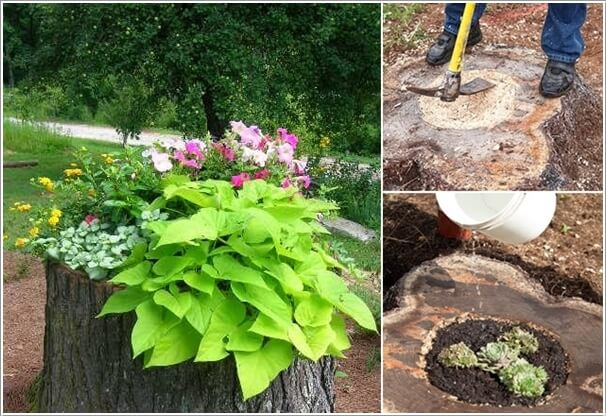 Convert the Tree Stump into a Planter