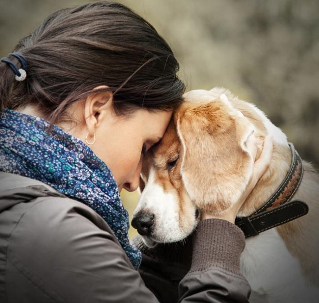 Dogs can detect sadness in humans