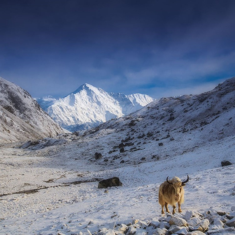 Guardian of the Himalayas