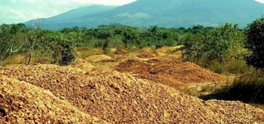 Juice Company dumps thousands of tons of Orange Peels in Deforested area; After 16 years, this is what it looks like now