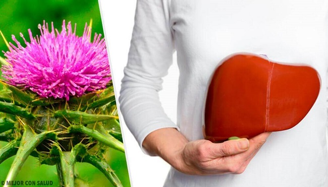 Milk Thistle Fight Infections