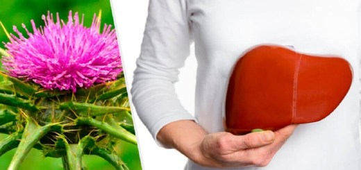 The Incredible Health Benefits of Milk Thistle, Natures Most Powerful Detoxifier