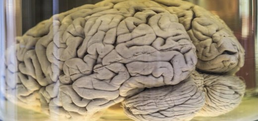 Why Do Our Brains Have Folds? Find Out Some Interesting Facts About Our Brain