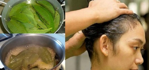 How to Use Guava Leaves to Prevent Hair Loss and Strengthen Your Hair