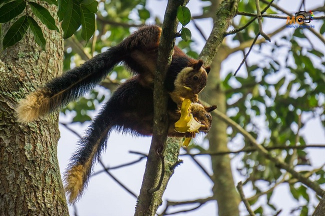 The species of least concern