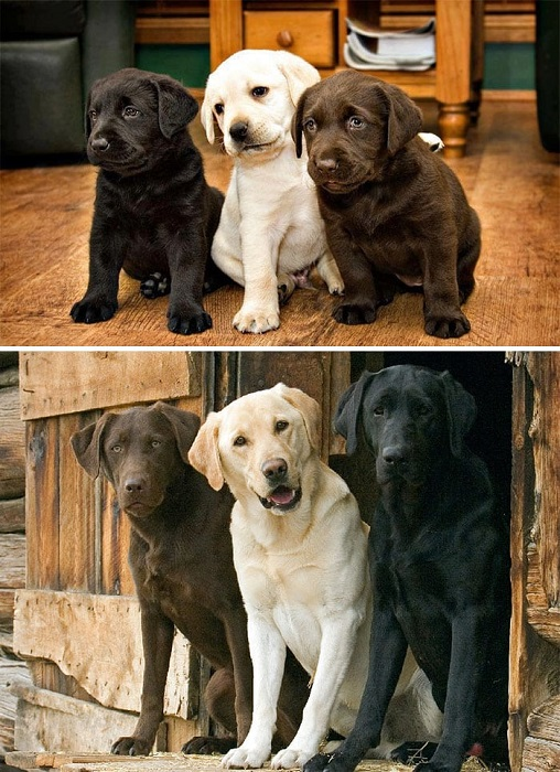 And the Three musketeers