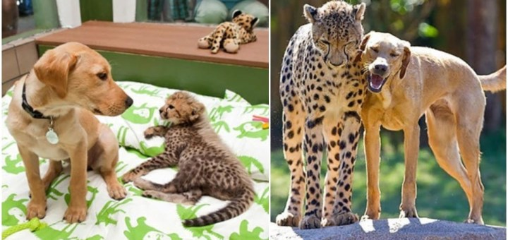 17 Precious Before And After Photographs Of Animals Grown Up Together That Are Simply Adorable