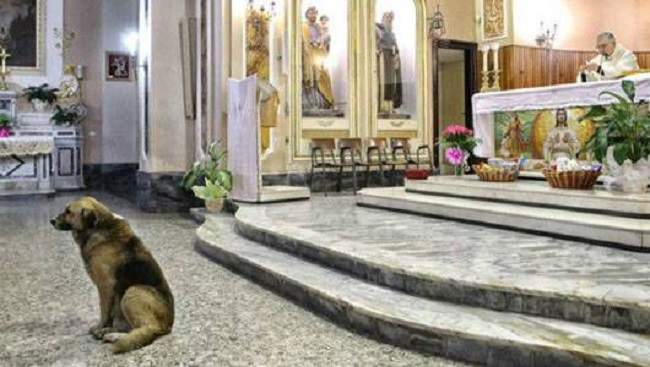 The pet who went to church