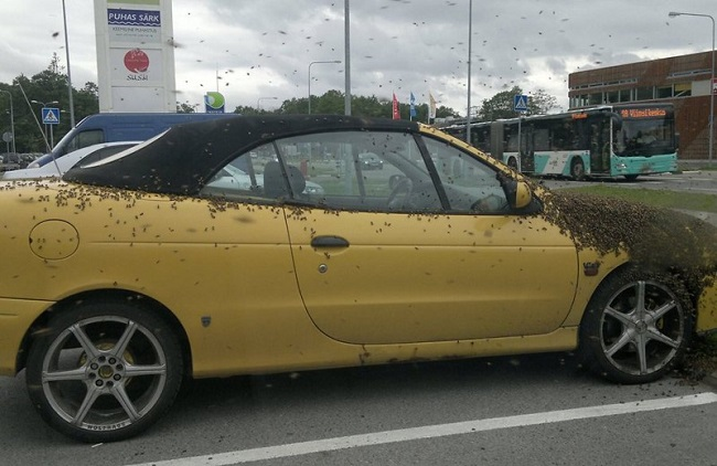 Bees on the car