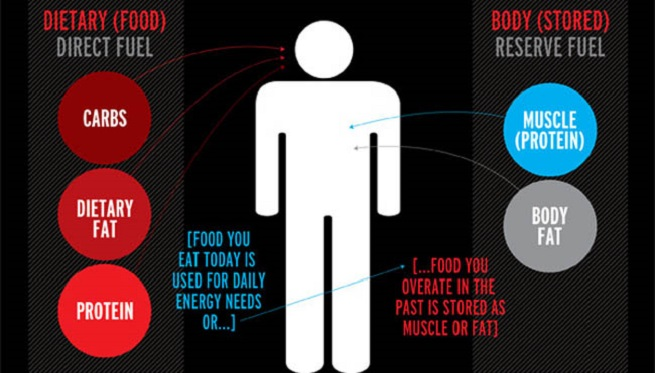 Our bodies utilize energy by two ways