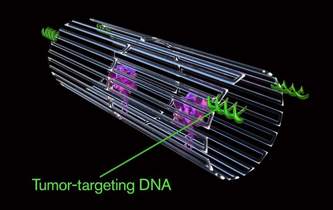 How to find the process of siRNA