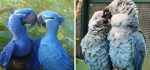Heartbreaking News As The Species Of Blue Parrot From The Movie Rio Is Now Extinct