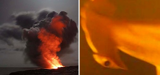 Marine Scientist Discover Sharks Living Inside An Active Underwater Volcano