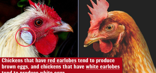 15 Amazing Facts To Impress Your Friends With