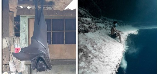 17 Natural And Real Pictures That Will Make You Think They Are from an Alien World