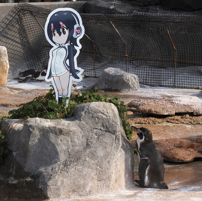 A penguin in love with anime
