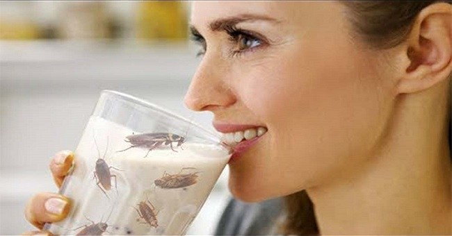 Cockroach Milk Is Being Termed As Next Super Food, Everything That You Should Know About It