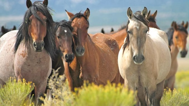 He Faked an Encounter with Wild Horses