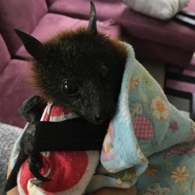 Bats are important to our ecosystem