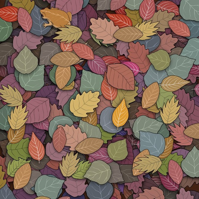 Find the toad on the leaves