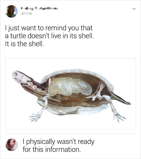 The inside of a turtle