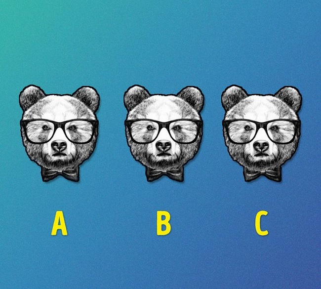 Which one of these bears is different