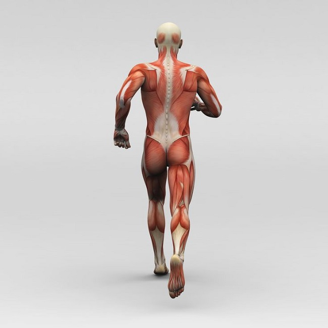 muscles are required to perform a simple body action