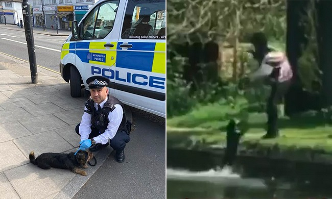 Man swung his dog repeatedly into the canal